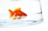 1594732 thum - 30代・40代 熱帯魚・金魚好き飲み会