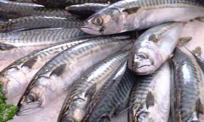 1020 01 1 - 予防医学 魚食べる人は大動脈瘤になりにくい効果
